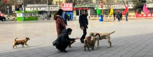 Stray dogs getting attention